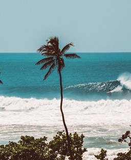 powerful waves on the sea with palm tress caught in the wind